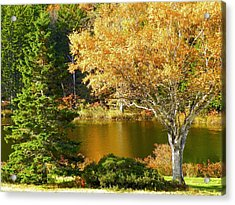 Acrylic Print featuring the photograph Golden Autumn by Gene Cyr