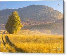 Golden Autumn Morning Acrylic Print