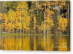Golden Autumn Pond Acrylic Print