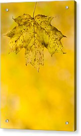 Acrylic Print featuring the photograph Golden Autumn by Sebastian Musial