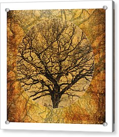 Golden Autumnal Trees Acrylic Print