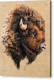 Golden Bison Acrylic Print by Debra Jones