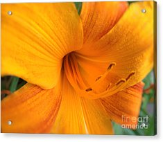 Golden Blossom Acrylic Print