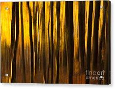 Golden Blur Acrylic Print by Anne Gilbert