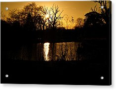 Golden Brown Acrylic Print by Dave Woodbridge