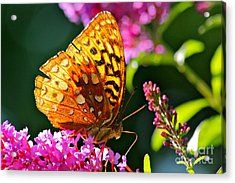 Golden Butterfly Acrylic Print