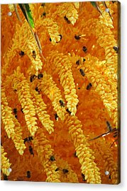 Golden  Buzz Acrylic Print