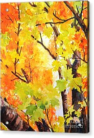 Golden Canopy 2 Acrylic Print