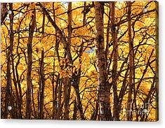 Acrylic Print featuring the photograph Golden Canopy by Gerry Bates