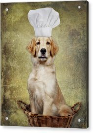 Golden Chef Acrylic Print by Susan Candelario