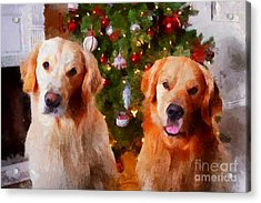 Golden Christmas Acrylic Print by Claire Bull