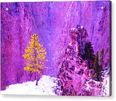 Golden Christmas In Yellowstone Acrylic Print
