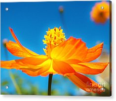 Golden Cosmo In The Sky Acrylic Print by Judy Via-Wolff