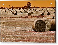 Golden Country Acrylic Print