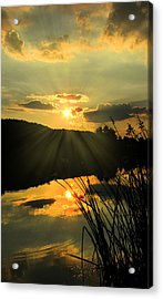 Golden Day Acrylic Print by Cindy Haggerty