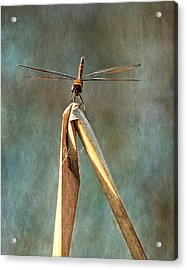 Acrylic Print featuring the photograph Golden Dragonfly I by Dawn Currie