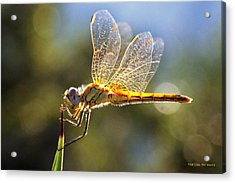 Golden Dragonfly Acrylic Print by Martina  Rathgens