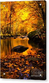 Acrylic Print featuring the photograph Golden Dream by Geraldine DeBoer