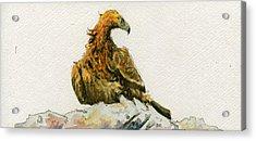 Golden Eagle Aquila Chrysaetos Acrylic Print