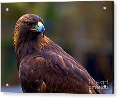 Golden Eagle Acrylic Print by Terry Horstman