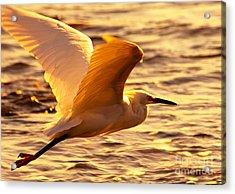 Golden Egret Bird Nature Fine Photography Yellow Orange Print  Acrylic Print by Jerry Cowart