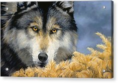 Golden Eyes Acrylic Print by Lucie Bilodeau