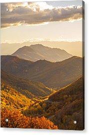 Golden Fall Acrylic Print