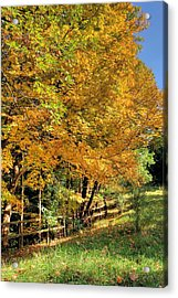 Acrylic Print featuring the photograph Golden Fenceline by Gordon Elwell