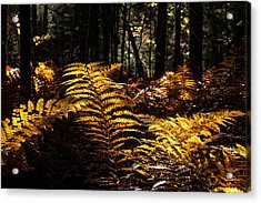 Golden Ferns In Autumn Acrylic Print by Jeff Folger