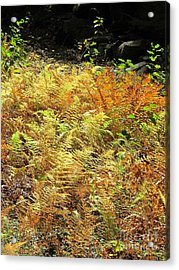 Golden Ferns Acrylic Print by Linda Marcille
