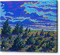 Golden Field And Cedars Acrylic Print