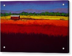 Golden Field Acrylic Print by David Patterson