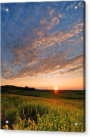 Golden Fields Acrylic Print by Davorin Mance