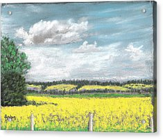 Golden Fields Of Alberta Acrylic Print by Fiona Graham