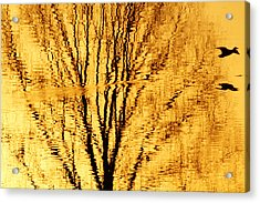 Golden Flight Acrylic Print by Alex Sukonkin