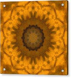 Golden Flower Acrylic Print by Dan Sproul