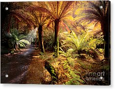 Golden Forest Acrylic Print by Ray Warren