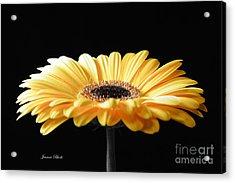 Golden Gerbera Daisy No 2 Acrylic Print