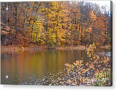 Golden Glory Acrylic Print by A New Focus Photography