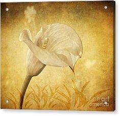 Golden Glow Cala Lily Acrylic Print