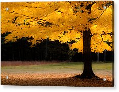 Golden Glow Of Autumn Fall Colors Acrylic Print by Jeff Folger