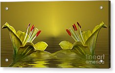 Acrylic Print featuring the photograph Golden Glow by Shirley Mangini