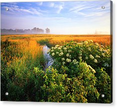 Golden Grassy Glow Acrylic Print