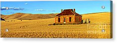 Golden Harvest Acrylic Print by Bill  Robinson