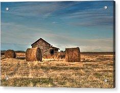 Golden Hay Acrylic Print by Lisa Knechtel