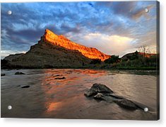 Acrylic Print featuring the photograph Golden Highlights by Ronda Kimbrow