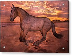 Golden Hour Pause Acrylic Print by Betsy Knapp