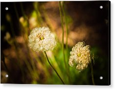 Acrylic Print featuring the photograph Golden Hour by Sara Frank