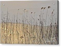 Golden Ice Acrylic Print