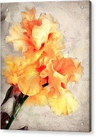 Golden Iris 1 Acrylic Print